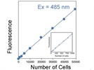 Cell Proliferation Assays: Methods for Measuring Dividing Cells