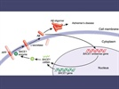The Disease Fighting Potential of Long Non-coding RNAs