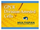 GPCR Division-Arrested Cells