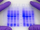 Western Blot Troubleshooting
