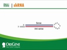 shRNA for Human, Mouse and Rat Genes