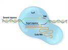 CRISPR/Cas System from OriGene, Learn the very basics from a 4-min video.