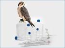Falcon®  Labware - The Brand Scientists Trust