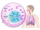 Calprotectin Human ELISA kit