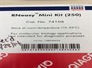 RNeasy Mini Kit
