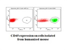 Very good antibody for detecting human Cd45 expression