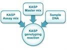 KASP™ Genotyping Assay