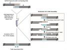 NEBuilder® HiFi DNA Assembly Master Mix