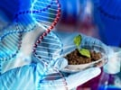 Planting a Seed for CRISPR/Cas9 Genome Editing