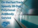 AnaSpec's Speedy 28-Day Polyclonal Antibody Service - On the Fast Track Streaming Video