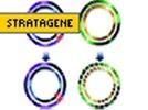 Stratagene's QuikChange II Site Directed Mutagenesis Kit