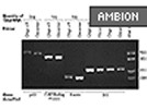 RETROscript™ First Strand Synthesis Kit For RT-PCR From Ambion
