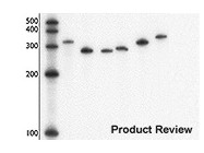 MAXIscript® <i>in vitro</i> Transcription Kit from Ambion (now Applied Biosciences)