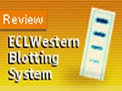 GE Healthcare' ECL Western Blotting Kit