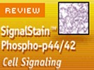 The SignalStain™ Phospho-p44/42 (Thr202/Tyr204) IHC Detection Kit from Cell Signaling Technology