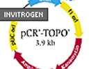 TOPO® TA Cloning™ Kit From Invitrogen