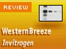 Invitrogen's WesternBreeze® Chemiluminescent Western Blot Immunodetection System