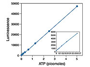 ATP Determination Kit from Life Technologies (Invitrogen)