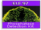 Molecular Probes' ELF-97 Endogenous Phosphatase Detection Kit