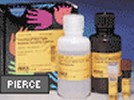 Pierce's Supersignal West Pico Horseradish Peroxidase (HRP) Detection Kit