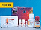 Sigma ProteoProfile Trypsin In-Gel Digest Kit