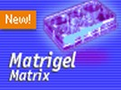 BD Matrigel™ Basement Membrane Matrix