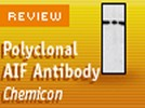 Chemicon International's Rabbit Anti AIF (apoptosis inducing factor) Polyclonal Antibody