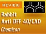 Chemicon's Rabbit Anti DFF 40/CAD Polyclonal Antibody