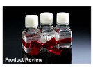 High Content Screening (HCS) Reagent Kits From Cellomics