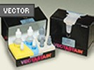Vectastain Universal Elite ABC Kit From Vector Laboratories