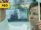Antibodies by Design Custom Antibody Service