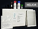 C-Reactive Protein ELISA Kits From Helica Biosystems, Inc.