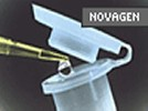 Novagen's pSTBlue-1 Perfectly Blunt Cloning Kit