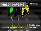Pretty as a Picture: Imaging Mass Spectrometry Provides a Spatial Map of Biomarkers in Tissue Sample
