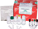 Kits for Methylation Detection