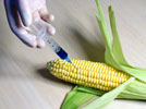 GMO Technology: A Research Tool Becomes An Ethical Debate