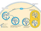 Autophagy: Finding the Line Between Normal and Diseased