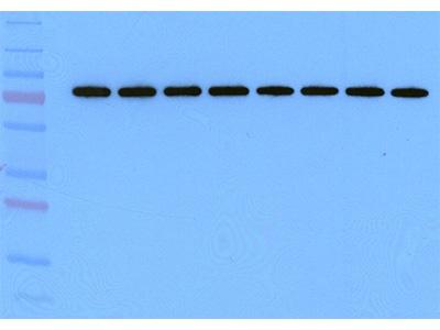 Trans Blot Turbo System From Bio Rad Biocompare Product