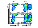 Intracellular IFN-g Staining for Mouse Cells by Flow Cytometry