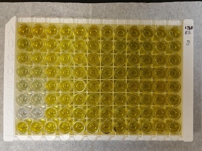 Reliable Human TNF-RII ELISA kit