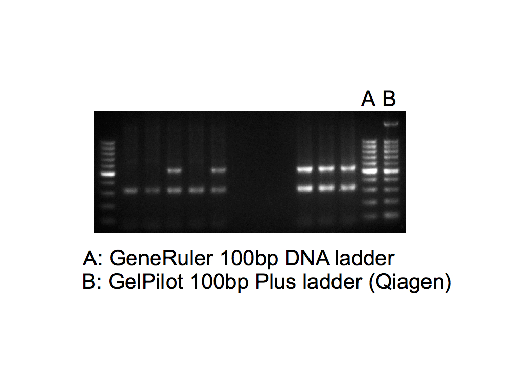 Generuler Dna Ladder Image Collections Norahbennett Com 2018