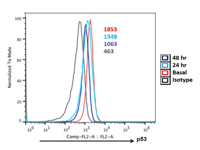 Analysis of Expression of p53 in Activated CD8+ T Cells : A Time Course Study