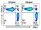 Utilization of CD45.1 as a Marker of Donor Leukocytes in Recipient CD45.2 Mice in a Bone-Marrow Transfer Chimeric Experiment