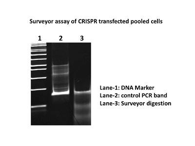 Great Mutation Detection Kits