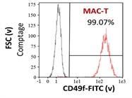CD49f FITC Antibody