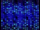 Selecting a DNA Gel Documentation System