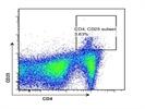 Anti-Mouse CD4 Antibody