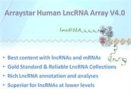 Human LncRNA Expression Array  V4.0