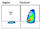 BioLegend PE anti-CD34 human