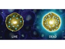 LIVE/DEAD® Fixable Dead Cell Stains
